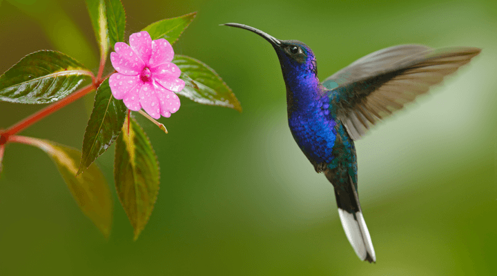 How to Find the Top Keywords for Your Home Builder Website Hummingbird image