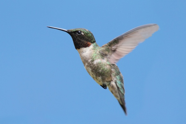 google-hummingbird-image-compressed.jpg