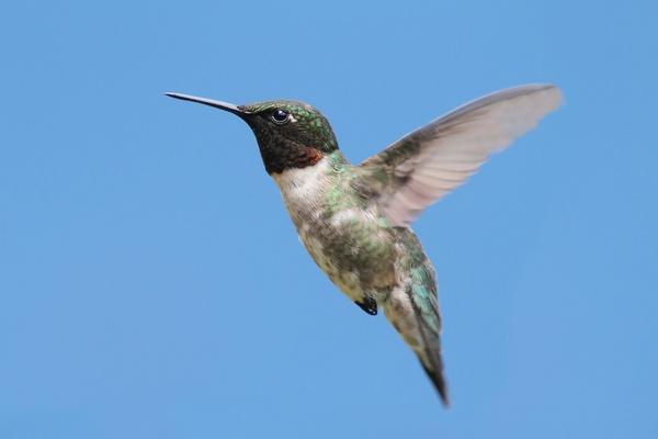 google-hummingbird-image-compressed.jpg